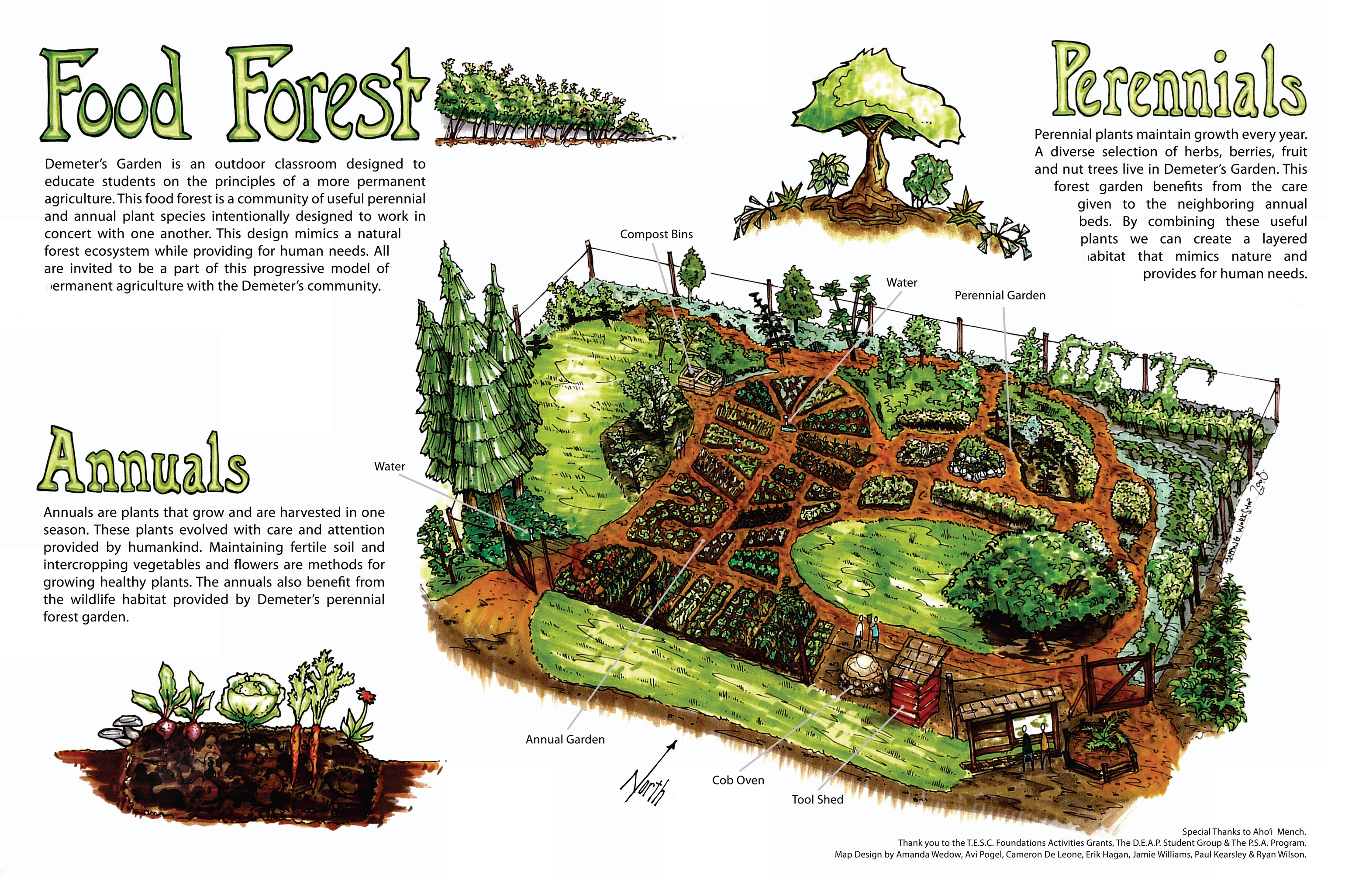 Food forest conceptual diagram by full circle tree crops for Food garden ideas