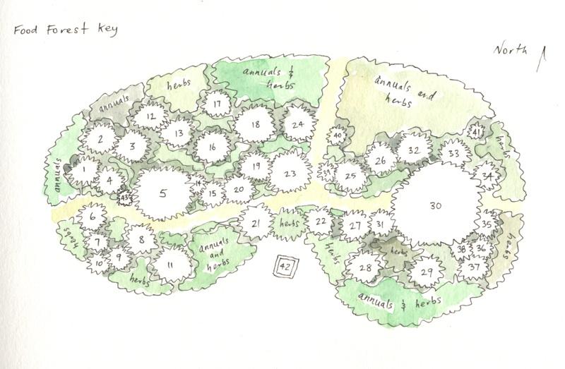 foodforestkey#1 :: Urban Food Forestry | Community Fruit