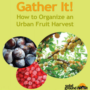 How to organize an urban fruit harvest or urban orchard